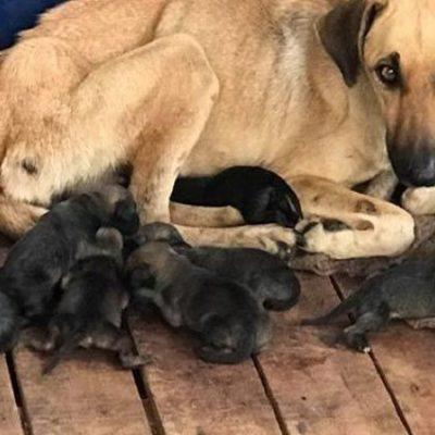 Darán fecha para esterilización de mascotas