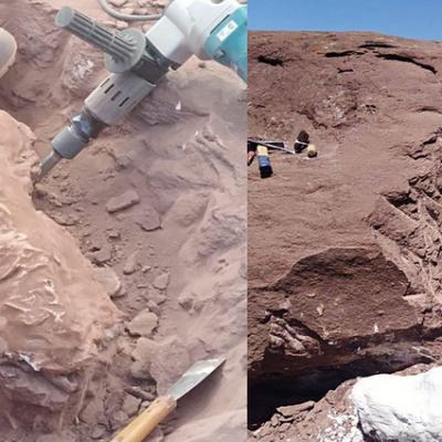 Vaca Muerta: hallaron restos de un dinosaurio herbívoro