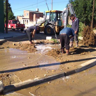 Vecino quiso sacar un árbol y rompió cañería de agua potable