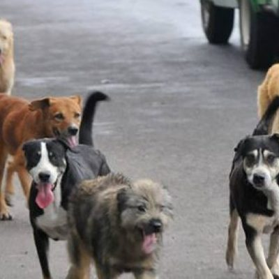 Bronca por envenenamiento de perros en Filli Dei