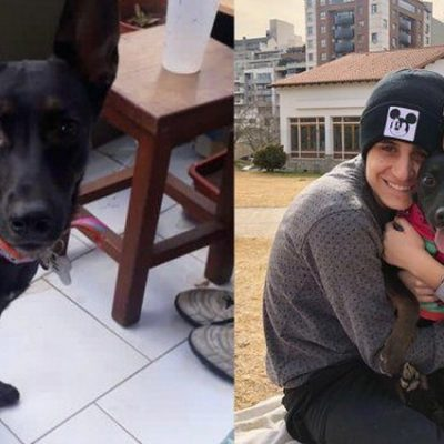 Transporte perdió la mascota de una joven huinculense