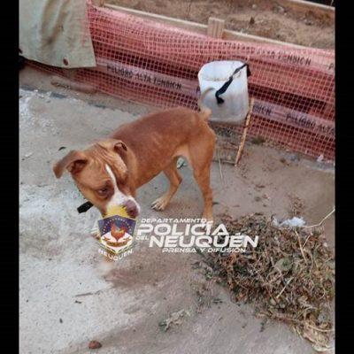 Rescataron perros maltratados