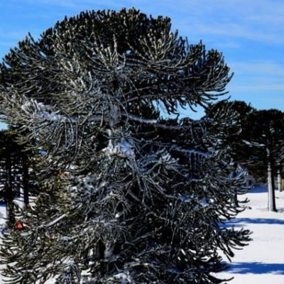 El Parque Primeros Pinos no se habilitará esta temporada 2021